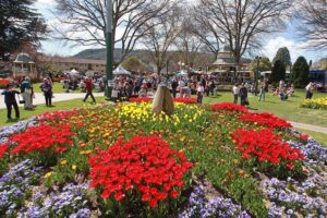 THINGS TO DO IN BOWRAL