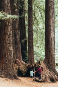 Places to see in Northern California